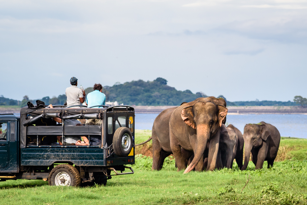 Meeting elephants in their natural environment is a true luxury